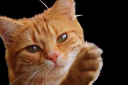 cat-1274094__340