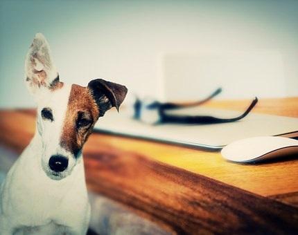 cours-education-chien
