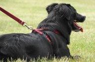dog-1888980__340