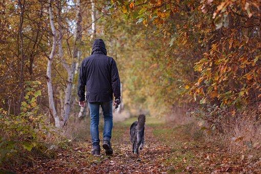 marche-chien