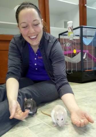 Une passion grandissantee! Voici mes rattes!