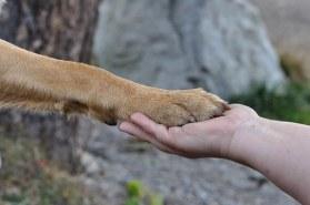 Relation confiance éducation canine