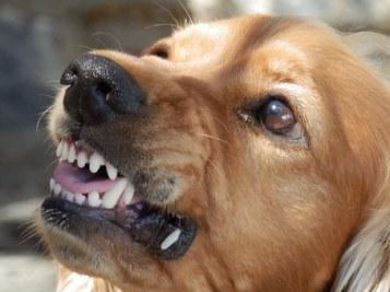 probleme-comportement-chien-agressif-peureux-nerveux