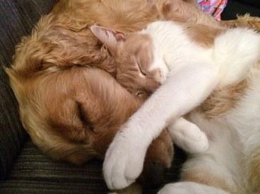 chat et chien.jpg