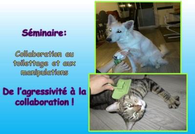 collaboration-au-toilettage-et-manipulations.jpg