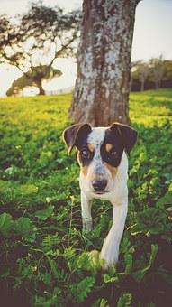 dog-1082096__340