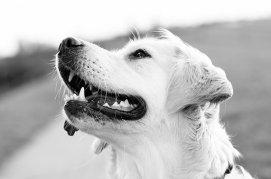 dog-1551699__340
