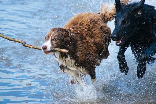 chien joue eau